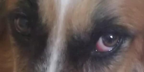 Close up of Daafsha's eyes